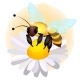 The Bee Sits on a Flower of a Field Chamomile - GraphicRiver Item for Sale