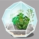 Composition in the Form of a Glass Terrarium Multi - GraphicRiver Item for Sale