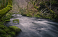 Cold winter atmosphere in a mossy gorge - PhotoDune Item for Sale