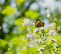 Macro of an orange butterfly perched on the flowers - PhotoDune Item for Sale