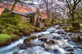 An ancient water mill on the banks of Combe Gill - PhotoDune Item for Sale