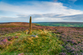 An ancient standing stone on Blakey Ridge - PhotoDune Item for Sale
