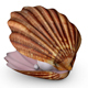 Sea Shell for Element 3D & Cinema 4D - 3DOcean Item for Sale