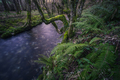 Moody atmosphere on a Cold River between Ferns - PhotoDune Item for Sale
