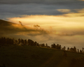 Silhouette of Trees in the Golden Mist - PhotoDune Item for Sale