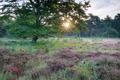 sunshine behind beech tree and heather - PhotoDune Item for Sale