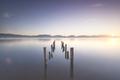 Wooden pier or jetty remains at sunrise. Massaciuccoli lake. Torre del Lago, Versilia Tuscany, Italy - PhotoDune Item for Sale