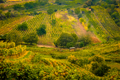 Landscape view of beautiful vintage vineyards and hills with colorful foliage - PhotoDune Item for Sale