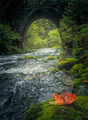 Old stone bridge and flowing river with colorful leaf in foreground - PhotoDune Item for Sale