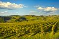 Panzano in Chianti vineyard and panorama at sunset. Tuscany, Italy - PhotoDune Item for Sale