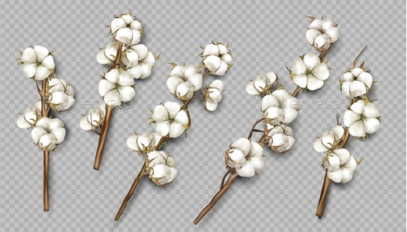 Realistic Cotton Branches with Flowers and Stems