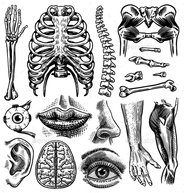 Anatomy of Human Bones and Muscles Set