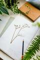 Herbarium and plants - PhotoDune Item for Sale