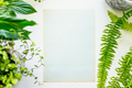 Blank paper and plants - PhotoDune Item for Sale