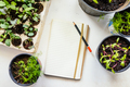 Growing vegetables - PhotoDune Item for Sale