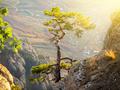 Tree on rock - PhotoDune Item for Sale