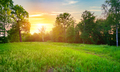 Meadow with green grass - PhotoDune Item for Sale
