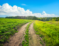 Country road in sunny day - PhotoDune Item for Sale