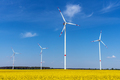 Wind energy turbines and a flowering canola field - PhotoDune Item for Sale