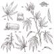 Alternative Medicine Cannabis Plant and Marijuana - GraphicRiver Item for Sale