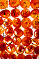 Tomato slices seasoned - PhotoDune Item for Sale