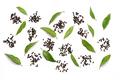 Peppercorns and Lemon Myrtle Leaves - PhotoDune Item for Sale