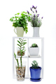 Indoor Plants on Wooden Shelf - PhotoDune Item for Sale