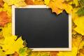 Blackboard and Leaves - PhotoDune Item for Sale