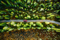 Aerial view of car on a country road in green forest in Finland - PhotoDune Item for Sale
