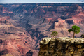 A small tree stand overlooking The Grand Canyon, Arizona - PhotoDune Item for Sale
