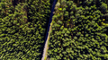 Aerial Drone View Over Forest at Spring - PhotoDune Item for Sale