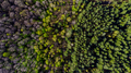 Drone Top Down View Over Forest At Spring - PhotoDune Item for Sale