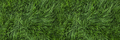 Green lawn background - PhotoDune Item for Sale