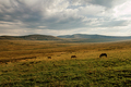 three horses in mountain valley - PhotoDune Item for Sale