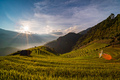 Sunset over Terraced rice field with lens flares, Mu Cang Chai, Yen Bai, Vietnam - PhotoDune Item for Sale