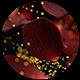 Petals Logo - VideoHive Item for Sale