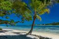Palm trees on a tropical beach, Vanuatu, Erakor Island, Efate - PhotoDune Item for Sale