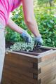 gardener plants flowers in wooden container pot - PhotoDune Item for Sale