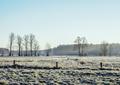Morning Frost in Gorajec, Poland - PhotoDune Item for Sale