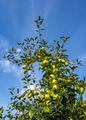 Apple Orchard in Poland - PhotoDune Item for Sale