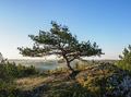 Lone Tree at Mirow Rocks - PhotoDune Item for Sale