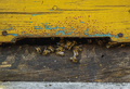 Beehive in Apiary, Poland - PhotoDune Item for Sale