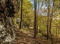 Forest at Polish Jura - PhotoDune Item for Sale