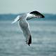 Seagulls Ocean Waves Surf