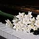 Nostalgic Piano Music