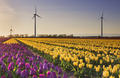 purple and yellow tulips and wind turbines - PhotoDune Item for Sale