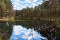 Wild Zabnik river in the nature reserve in Jaworzno - PhotoDune Item for Sale