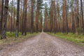 Dirt road through pine forest - PhotoDune Item for Sale