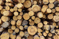 Stack of wooden logs as a background - PhotoDune Item for Sale