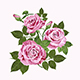 Pink Roses - GraphicRiver Item for Sale